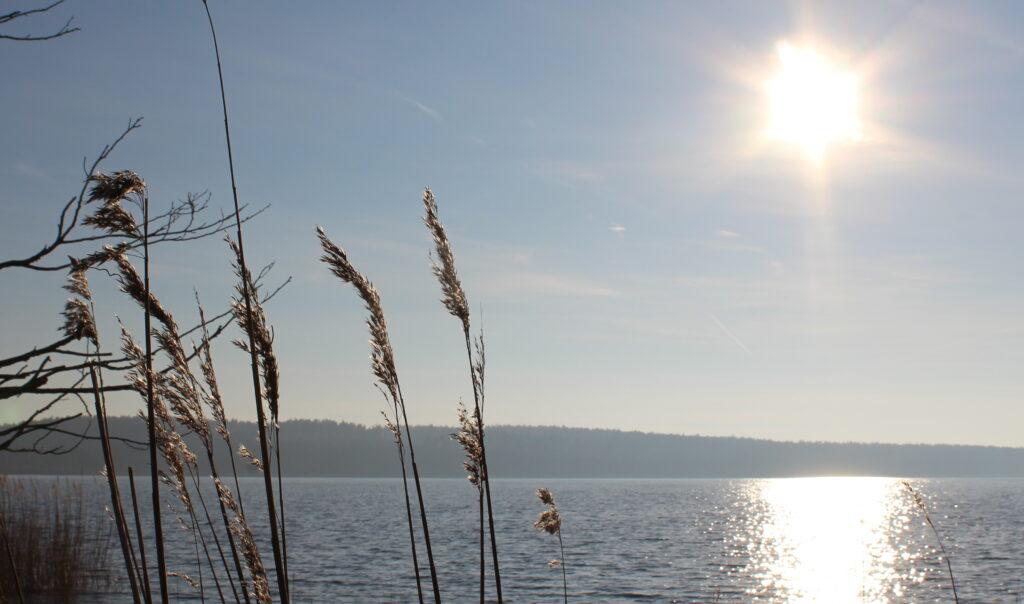 mindfulness i naturen. sol spejler sig i sø